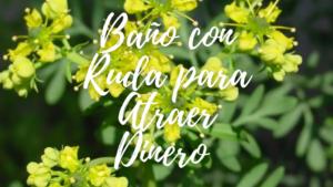 Bano-con-Ruda-para-atraer-DINERO-y-TRABAJO